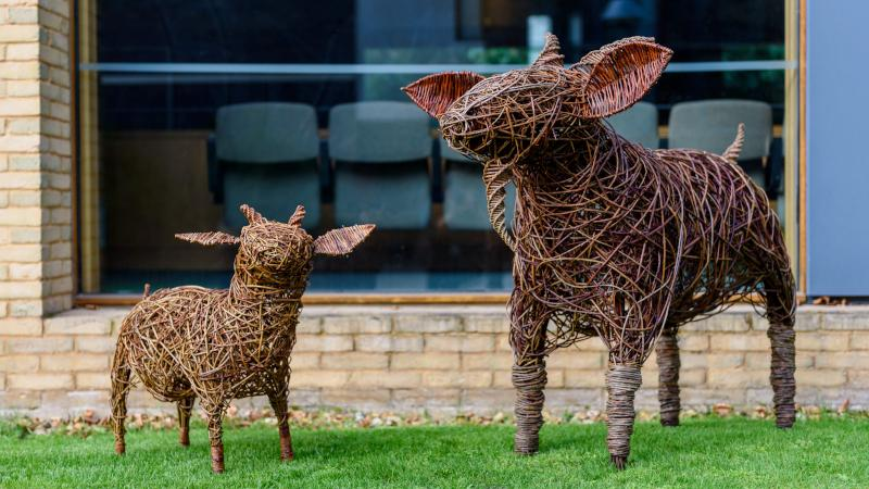 Fitzwilliam College Billy Goats